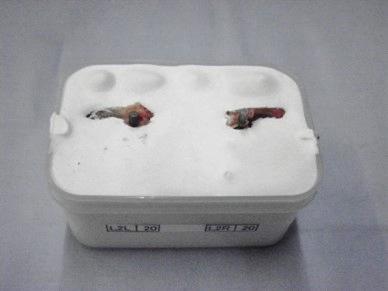 金属製骨ねじ機械的特性測定機の応用事例_小型犬の腰椎部ねじ込み・ネジ戻りトルク試験